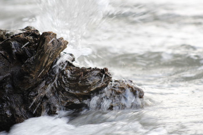 Tree Log Wave Beauty In Nature Close-up Day Motion Nature No People Outdoors Power In Nature Water Waterfront