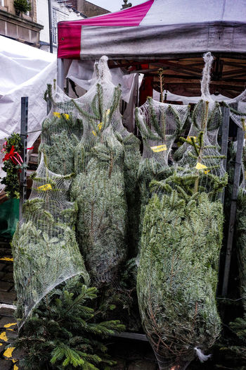Christmas trees for sale, Skipton Market on a grey, wet day. Market Skipton Yorkshire Choice Christmas Tree Close-up Day For Sale Freshness Hanging Market Market Stall No People Outdoors Retail  Small Business Store Variation