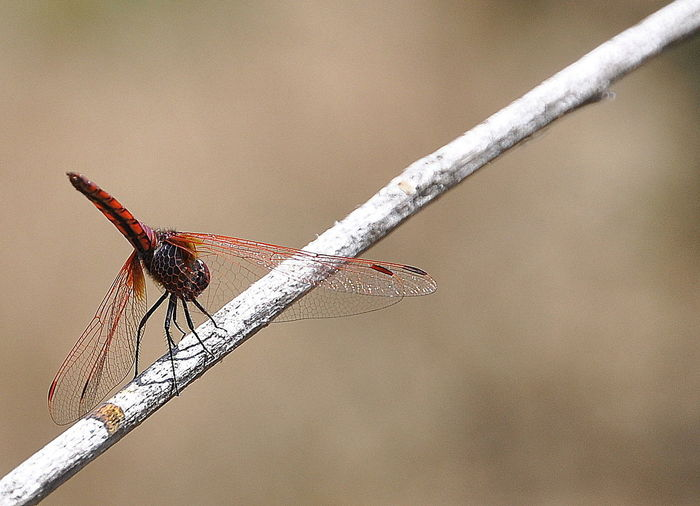 Close-up of damselfly perching on pole