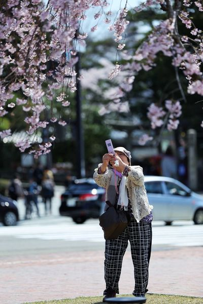 Japan Photography 金沢市 桜 Cherry Blossom One Person City Real People Street Day Tree Plant