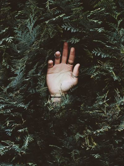 Person Hand In A Bush
