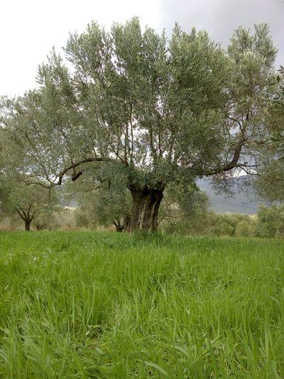 Turkey Izmir Nature Tree Valley Green