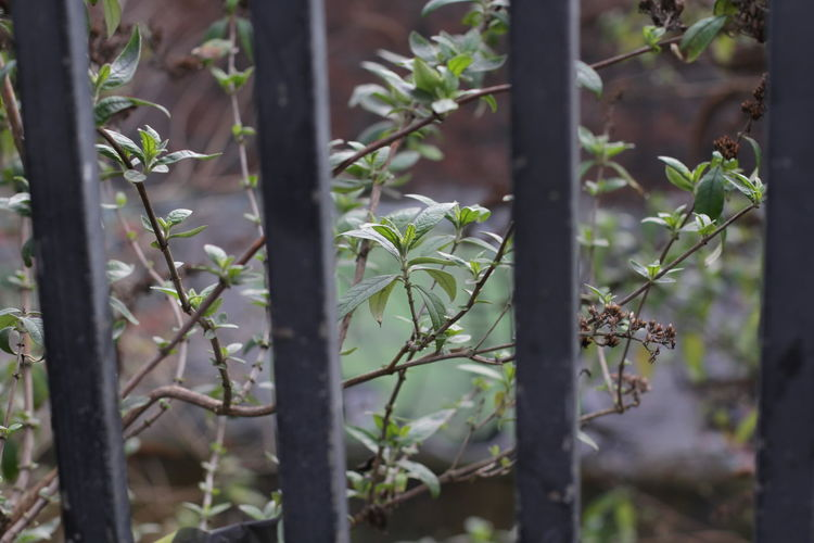 Bars And Tree Birmingham Black Railings Canal Canal And Bush City Centre Natu City Wildlife Close-up Digbeth Green And Black Leaf Nature Railings Shallow Depth Of Field Shallow Focus Spring In The City Springtime Trees Twigs And Branches Urban Wildlife Vertical Vertical Garden Vertical Landscapes Vertical Symmetry Water