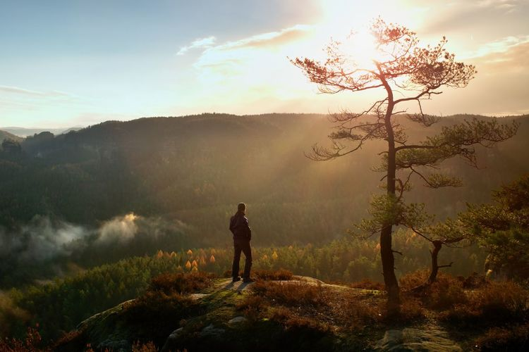 Hiker stand at heather bush on the corner of empire bellow pine tree. man is watching over the mist