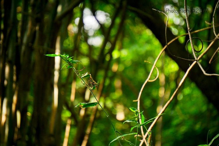Animal Wildlife One Animal Animals In The Wild No People Reptile Animal Themes Day Tree Nature Outdoors Close-up EyeEmNewHere Sonhalphacommunity Sony A6000 Rural Scene Forest Lush Foliage Beauty In Nature Tranquil Scene Plant Tranquility Scenics Landscape Growth Green Color
