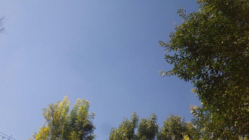 •Tardes en Parque Residencial Coacalco• ▶ Relaxing Tardesita Tardes TardesEn TardesSoleadas Coacalco CoacalcoDeBerriozabal ParqueResidencialCoacalco