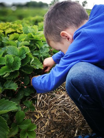 Close-up of boy planting on field