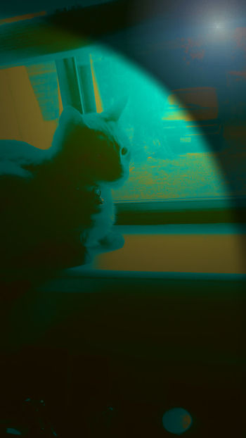 Kitty Snow-Bathing In The Window Snow ❄ Looking Through Window Pets Calm Close-up