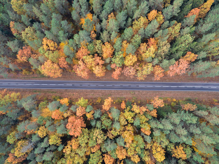 Autumn Drone  EyeEm Nature Lover Nature Road The Week On EyeEm Transportation Autumn Beauty In Nature Change Close-up Day Dji Forest Green Color Growth Leaf Nature No People Orange Color Outdoors Phantom Plant Scenics Tree