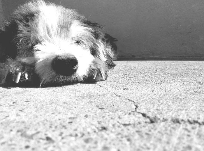 Sasha❤ Dog One