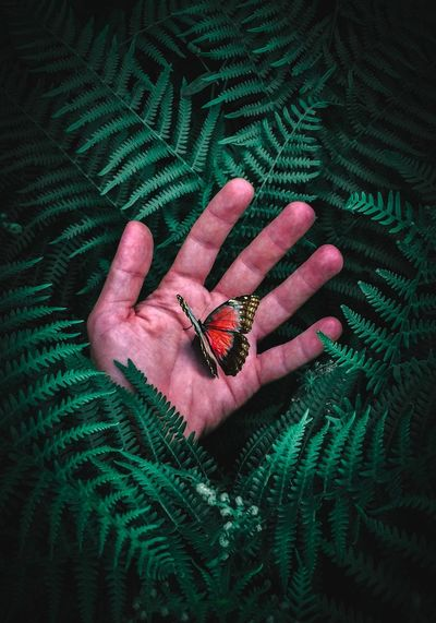 Close-up of butterfly on hand by leaves