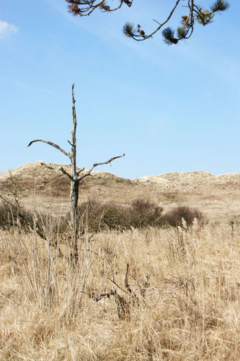 Dry plant on land against sky