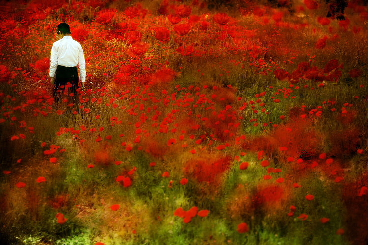 World of Imagination Faith Field Flowers Growth Jewish Jewish Boy Poppies  Poppies Field Red Red Religion Surreal