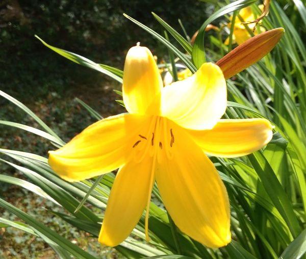 Sunny Sunny Day