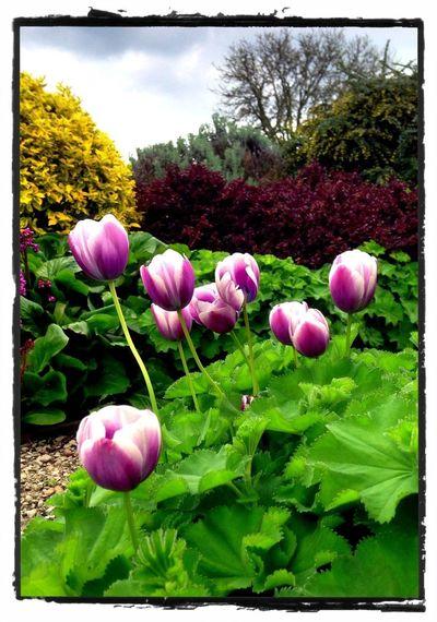 IPhone Garden HDR Flowerporn