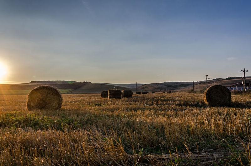 Agriculture Autumn Ballot Barrel Crop  Farm Field Field Hay Hey✌ Landscape Outdoors Romania Rural Scene Sky Sunset Tranquility