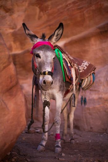 Donkey standing by rock formation