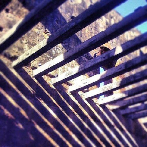 """""""Palos en las Ruinas"""" 1fotoaldiazcrd @zonacolonialrd"""