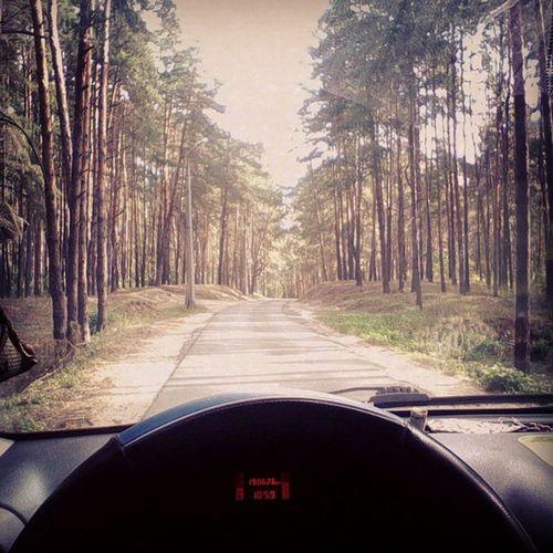 дорога в лесу зарулем