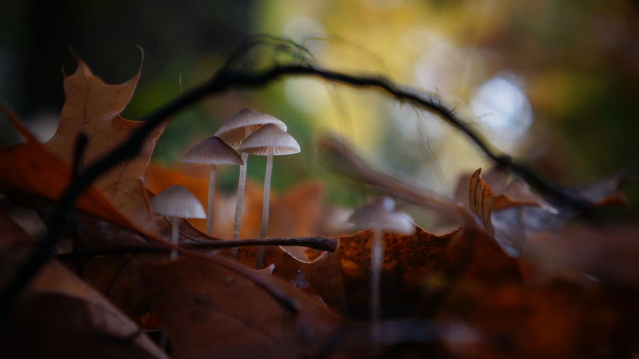 Arch Autumn Autumn Autumn Colors Beauty In Nature Bokeh Bokeh Photography Close-up Day Fragility Freshness Fungi Group Of Objects Leaf Mushroom Nature No People Outdoors Root Wet