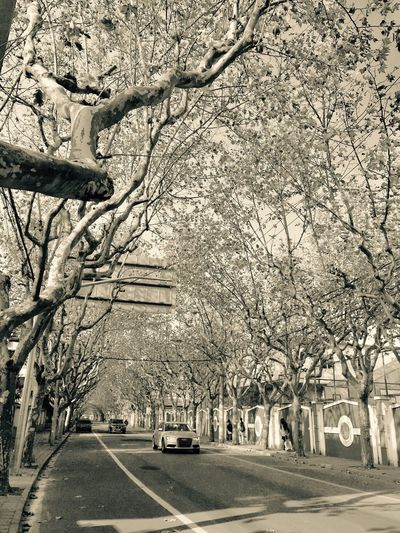 Road Outdoors Beauty In Nature City Apple City Life Looking Clear Sky Street