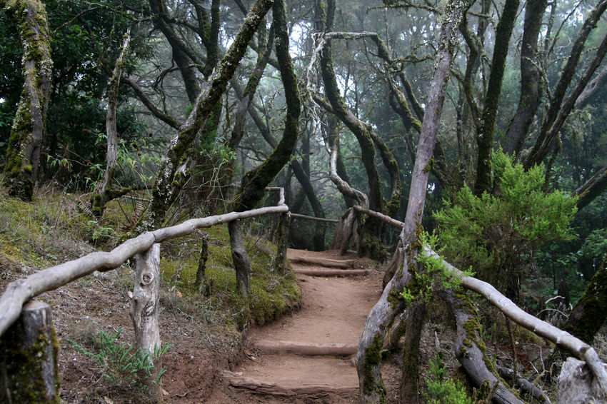 Betterlandscapes Sky Landscape Foggy Day Foggy Morning Outdoors Forest Tranquility Jungle Growth Branch Foggy Weather Scenics Footpath Beauty In Nature No People Garajonay LaGomera CloudForest Tranquil Scene The Way Forward Garajonay National Park LaGomeraIsland EyeEmNewHerе An Eye For Travel