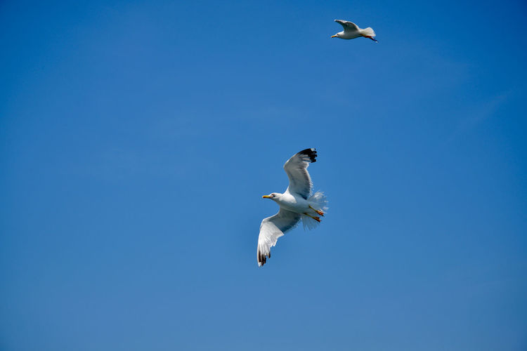 Doves Seagulls