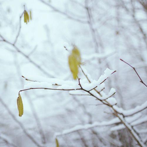 Winter und die