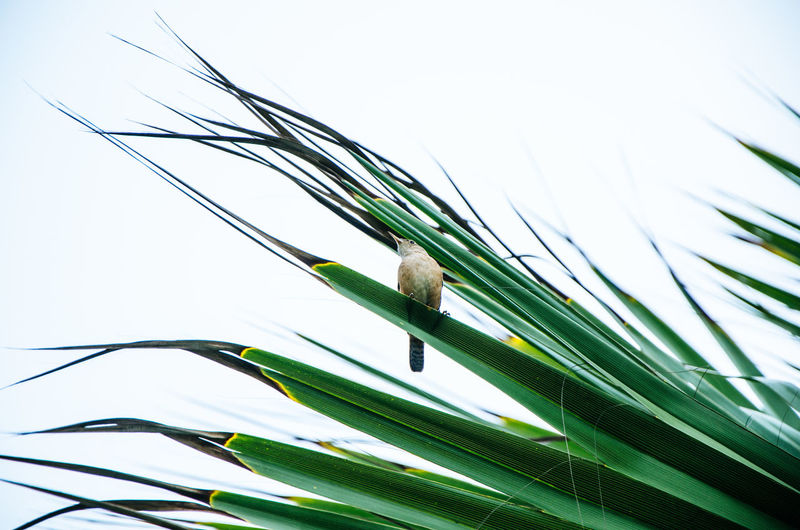 Low angle view of bird perching on plant against sky