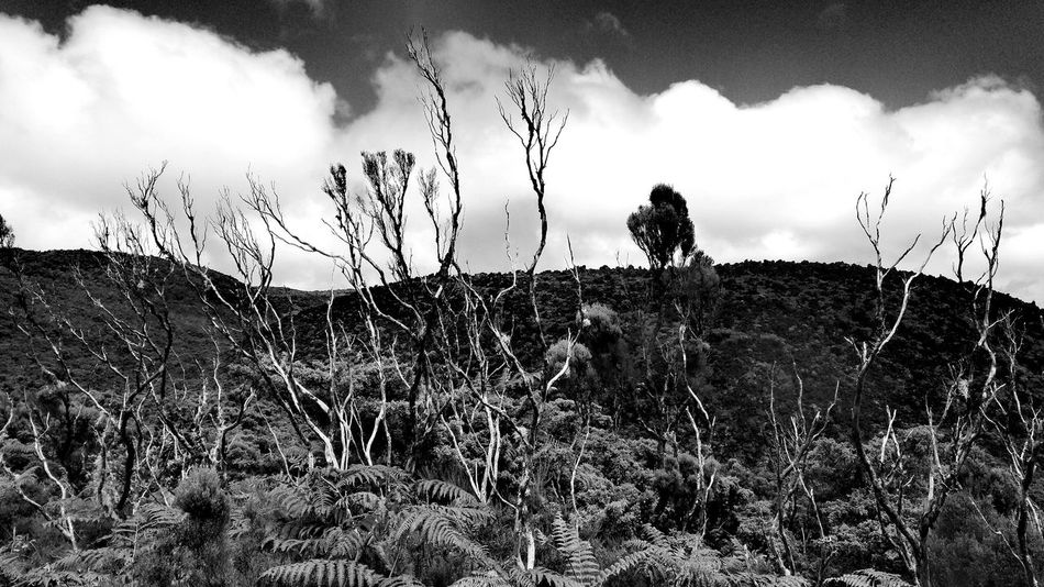 TreePorn Azoren Terceira Tree And Sky EyeEm Best Shots - Nature EyeEm Gallery Plants And Flowers Eyeemphotography Clouds And Sky Eye4photography  EyeEm Best Shots EyeEm Nature Lover Scenic View Showcase July Hiking Vulcanic Landscape EyeEmBestPics Black And White EyeEm Best Shots - Black + White Monochrome Photography