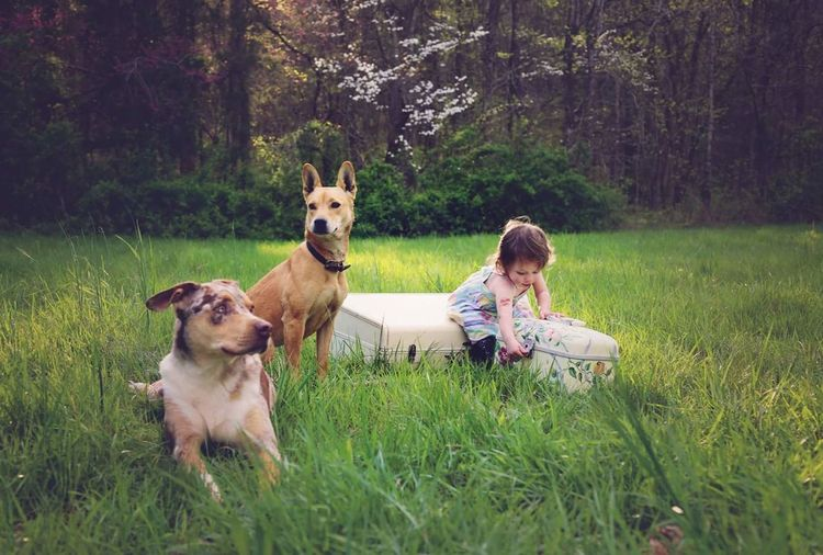 Child With Two Dogs On Green Meadow