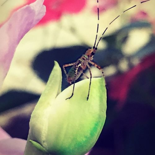 Insect_perfection Insects  Bns_buginsects Tgif_insects Phototag_it Photowall Natura_love_ Bestnatureshot Amazingphotohunter Theredheadedphotographer Nature_sultans Insect_gr Todoclick Nature Lens_lovers_united Ig_ikeda KINGS_INSECTS Splendid_nature Hot_shotz Nuc_mbr Acworthphotographer Ig_week_nature Arte_of_nature Fpog IGS_squared