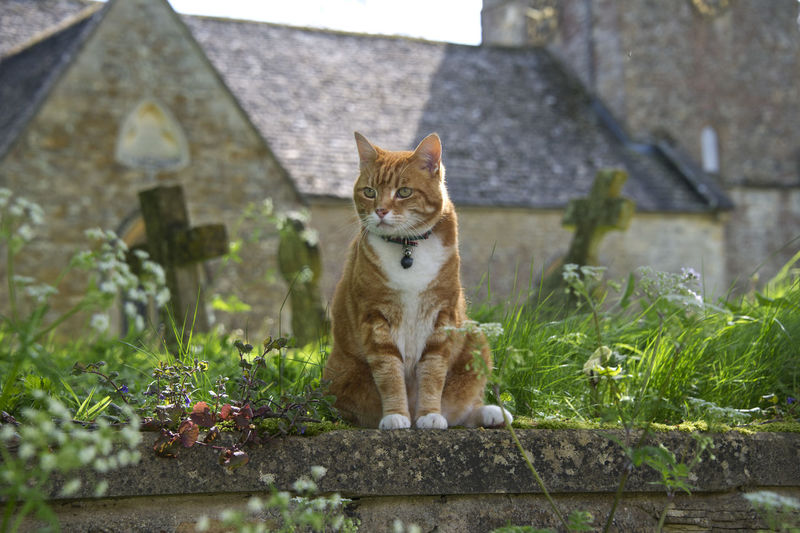 Cat Sitting In Graveyard