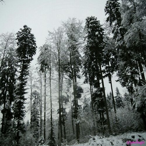 Hanging Out Blackandwhite Trees Snow Bws_worldwide Eye4photography  Ee_daily Greenthumb Bwstyles_gf Bws_artist_eu