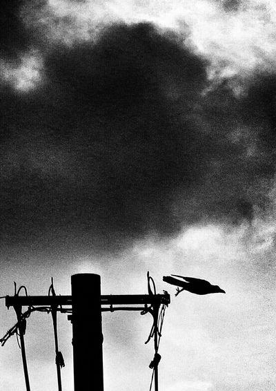 もういっちょう♪(*^^)/ Silhouette_collection Crow Silhouettes Eyeem Best Shots - Silhouette Silhouette Twilight Sky Twilight EyeEm Best Edits シルエット部 ダーク部