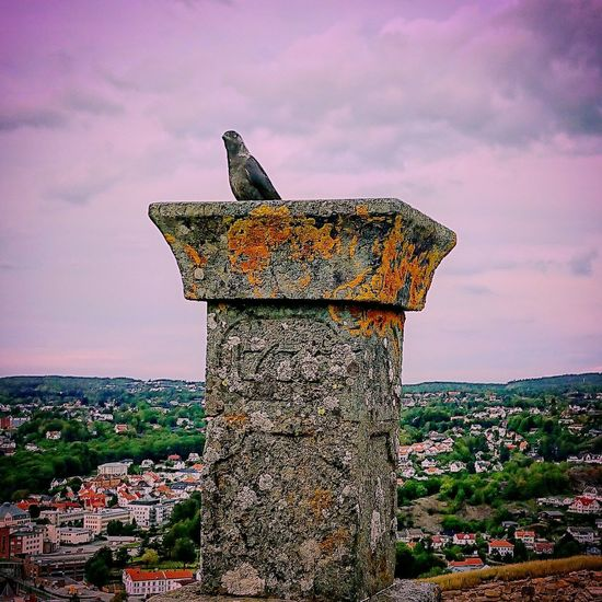 It's the raven that never came back 2 the Ark, hanging out with the viper at the garden of eden that angered the God. Show who you really are; moon eclipsing the starReally Architecture Fortification Fortifications Remnants Of History Military History Strategic Beauty In Nature EyeCandy  Wormholes Cityscape First Eyeem Photo Luckyshot No People EyeCandy  Crow Cityscapes Birdseyeview Raven Angrybirds Cant Trust Em Cold Birds Cold Eyes