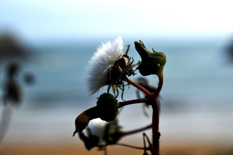 Beauty In Nature Close-up Coast Day Focus On Foreground Nature No People Outdoors Sea And Sky Seed Seed Head Selective Focus Wildlife