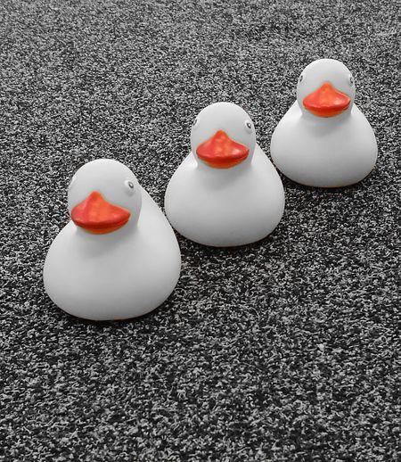Orange Blackandwhite Ducks😄 Plastic Ducks Make Me Smile Red Close-up No People Day Outdoors Denmark 🇩🇰 Funny Pics And Plastik And Sort Og Hvid Simplicity