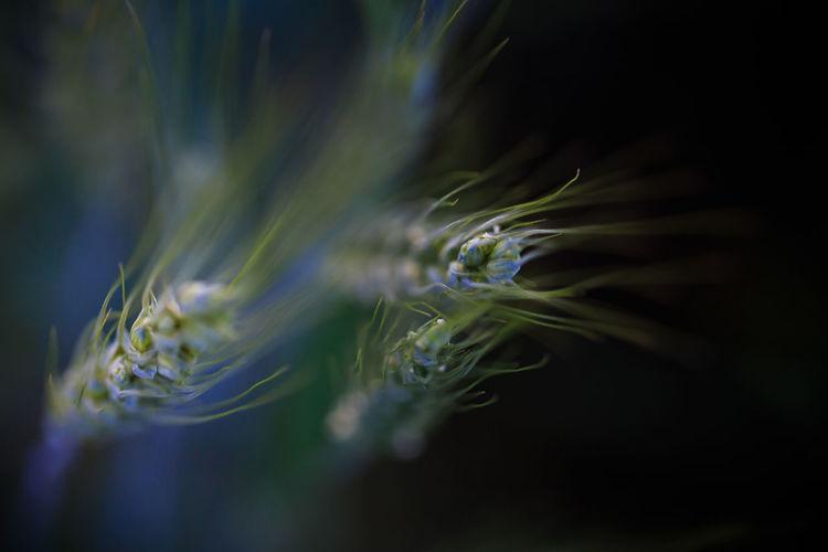 Close-up EyeEm Best Shots EyeEm Nature Lover Macro Nature Plants Weed