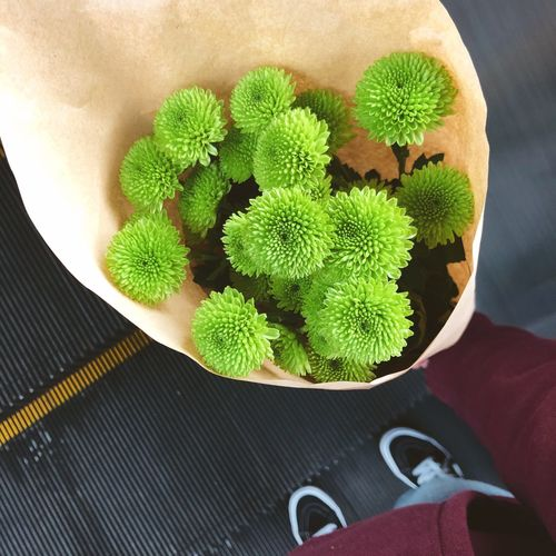 Close-Up Of Man Holding Seedlings In Paper Bag