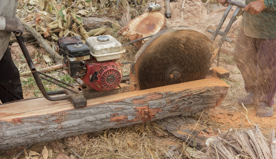Building Building Exterior Buildings Built Structure Day Machine Man Man At Work Men Men At Work  Outdoors Saw Saw Blade Saw Dust Saw Mill Saw Teeth Tool Tools Tree Tree Trunk Trees Trunk Trunk Tree Trunkofwood Trunks