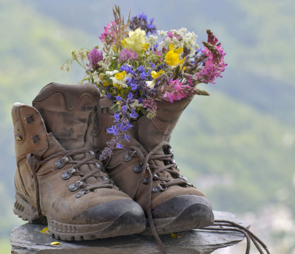 Close-up of shoes with colorful flowers on rock