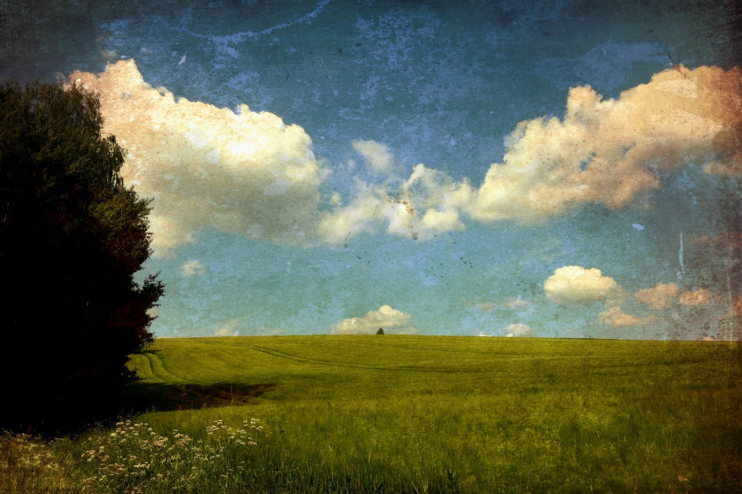 sky, grass, field, tranquility, tranquil scene, cloud - sky, landscape, beauty in nature, nature, scenics, tree, grassy, growth, cloud, green color, cloudy, blue, idyllic, outdoors, no people