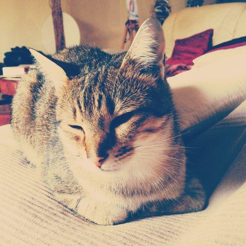 Un chat aveugle mais beau Hello World