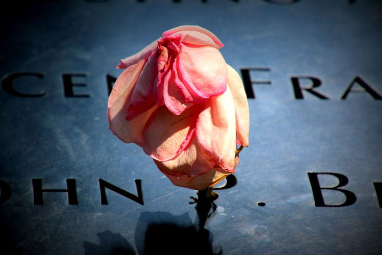 911 Memorial 911worldtradememorial Gedenken NYC Purplesnail Beauty In Nature Close-up Communication Day Flower Flower Head Fragility Freshness Nature No People Outdoors Petal Red Rose - Flower Rose🌹 Text