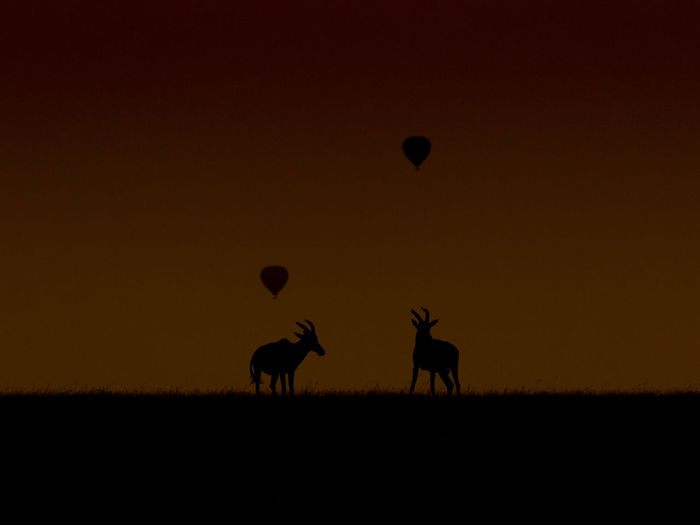 Silhouette topi deer with hot air baloons