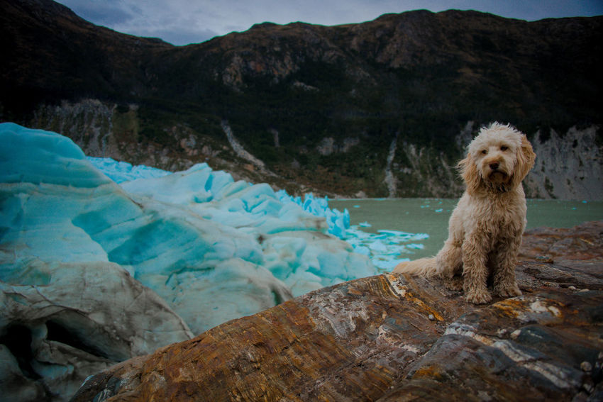 Adventures Argentina Blue Ice Dog Forest Ice Memories Mountain River Road Rock - Object Sea Ship Sky The Great Outdoors - 2017 EyeEm Awards Travel