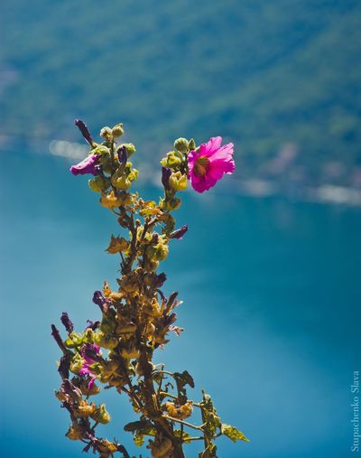 The Great Outdoors - 2017 EyeEm Awards Flower Petal Fragility Growth Beauty In Nature Nature Freshness Day No People Flower Head Blooming Outdoors Plant Pink Color Focus On Foreground Close-up Leaf Low Angle View Tree Sky