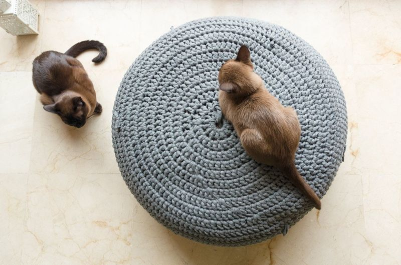 Brown Burmese Cat Cat Elevated View Kitten Knitted Pouf Multiple Cats Ottoman Pets Resting