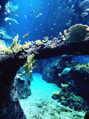 Hello World Fish World